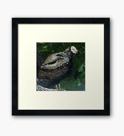 Rebob Ancestor Turkey Vulture Framed Print