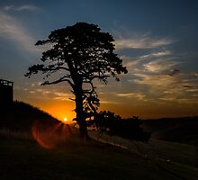 One Tree Hill by Frank Moroni