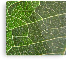 Leaf vein Metal Print