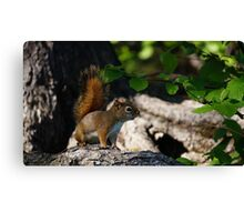 New Brunswick Red Squirrel Canvas Print