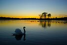 Swan Loch by David Alexander Elder