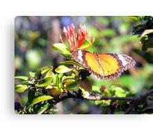 Aruba Butterfly Farm Canvas Print