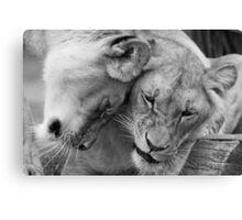 Cute lions Canvas Print