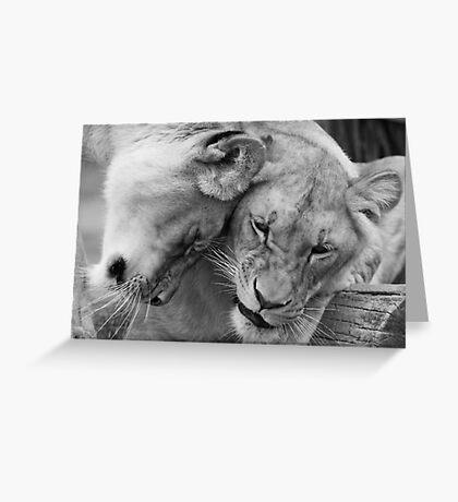 Cute lions Greeting Card