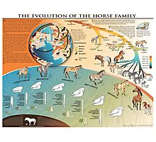 Horse Evolution Photographic Print