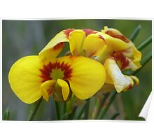 Smooth Parrot Pea Poster