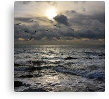 Seascape with birds Canvas Print