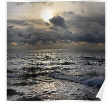 Seascape with birds Poster