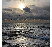 Seascape with birds Photographic Print