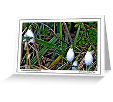 Snowdrops and Droplets Greeting Card