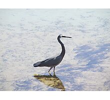 Egret in the Shallows Photographic Print