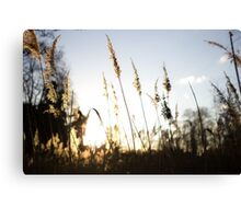 Life of a Golden Plant Canvas Print
