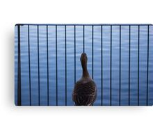 The Lone Duck Canvas Print