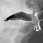 Seagull in B&W  by Margaret Stanton