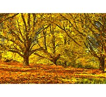 Oak Grove Photographic Print
