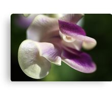 Corkscrew Flower  Full Bloom Canvas Print