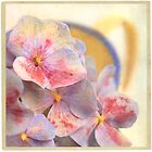 """ Hydrangea still beautiful past it prime "" by Malcolm Heberle"
