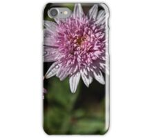 Insect in Double Aster Leith Park Victoria 20151126 0740   iPhone Case/Skin