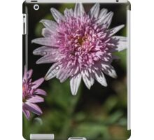 Insect in Double Aster Leith Park Victoria 20151126 0740   iPad Case/Skin