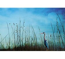 Blue without you ... Photographic Print
