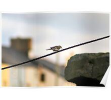 Wagtail on a wire Poster