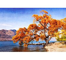 canvassed tree Photographic Print