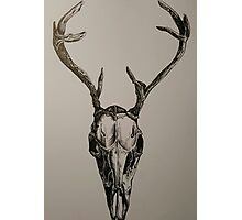 Death - Stag Skull. Black Ink Photographic Print