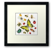set of watercolor insects Framed Print