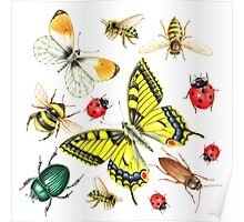 set of watercolor insects Poster