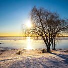 Winter morning on the river by Tamara Travers