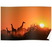 Giraffe Silhouette - African Wildlife Background - Going to the Sun Poster