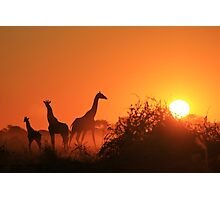 Giraffe Silhouette - African Wildlife Background - Going to the Sun Photographic Print