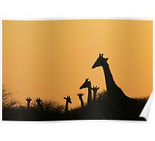 Giraffe Silhouette - African Wildlife Background - Colors in Nature Poster