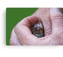 A Bird in the Hand..... Canvas Print