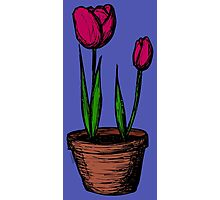 Potted Tulips Photographic Print