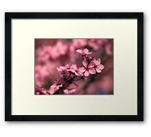 Cherry Bloom Framed Print