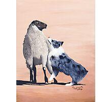 One Tough Sheepdog Australian Shepherd Photographic Print
