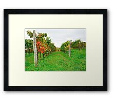 Autumn Grape Vines Near Abbazia Rosazzo Framed Print