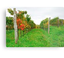 Autumn Grape Vines Near Abbazia Rosazzo Metal Print