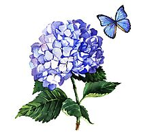 Blue hydrangea and butterfly Photographic Print