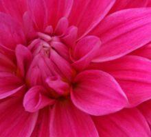 Summer Blooms Sticker