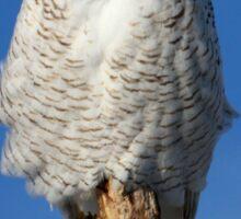 Owl Totem Sticker