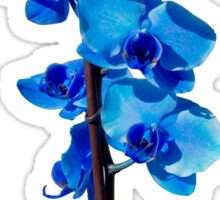 Orchid Sticker