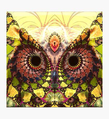 Fractal Owl Photographic Print