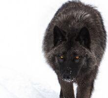 Black Wolf Sticker