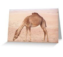 Camel in desert Greeting Card