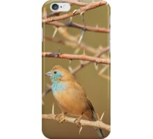 Blue Waxbill - Exotic Colorful Wild Birds from Africa - Sharp Beauty iPhone Case/Skin