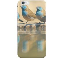 Exotic Colorful Wild Birds from Africa - Blue and Violet-eared Waxbill - Colors in Nature iPhone Case/Skin