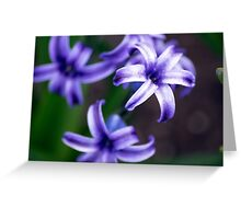 Spring Flower Series 10 Greeting Card
