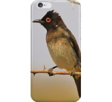 Red-eyed Bulbul - Exotic Colorful Wild Birds from Africa iPhone Case/Skin